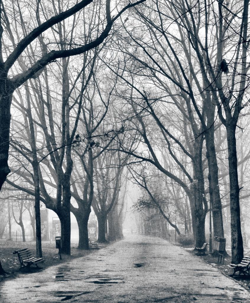 morning_walk_by_yellowNOT