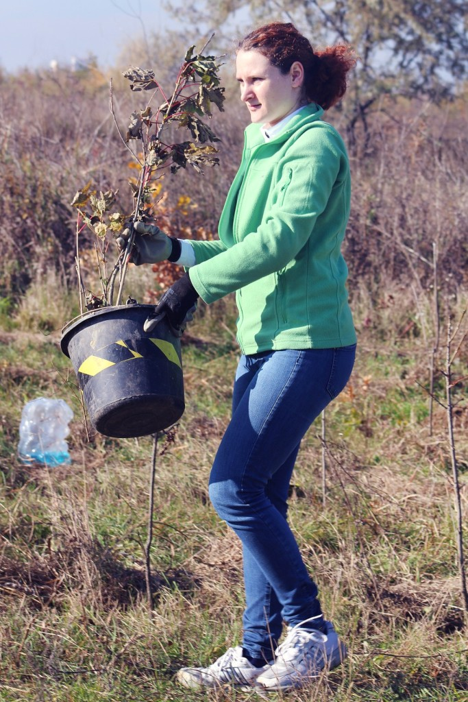Mai Mult Verde - Plantare Ploiesti