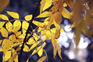 Autumnal Bucharest